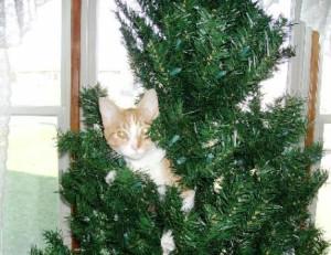 Hanna the Holiday Cat